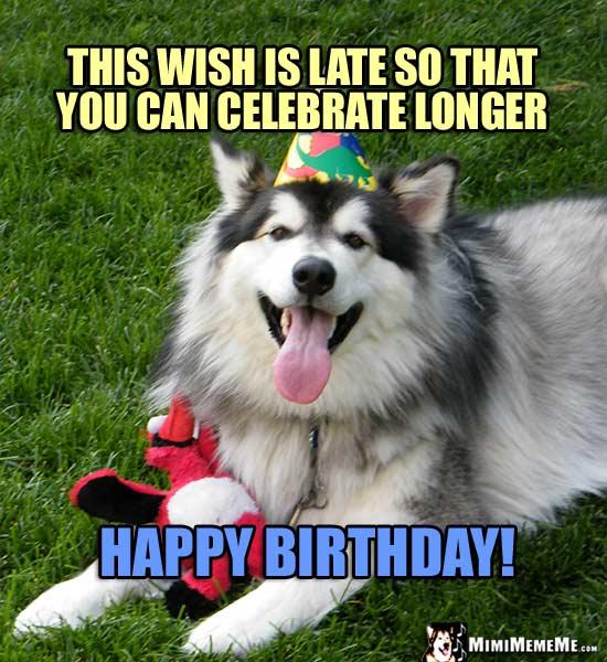 Funny Dog Tells Birthday Jokes Happy Belated Birthday