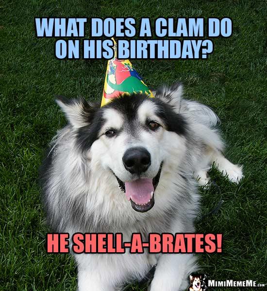 Dog Birthday Happy Mimi