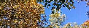 Bad Ems im Oktober, Natur, goldener Herbst