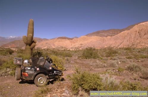 DD et les cactus