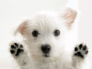 Cute Google dog