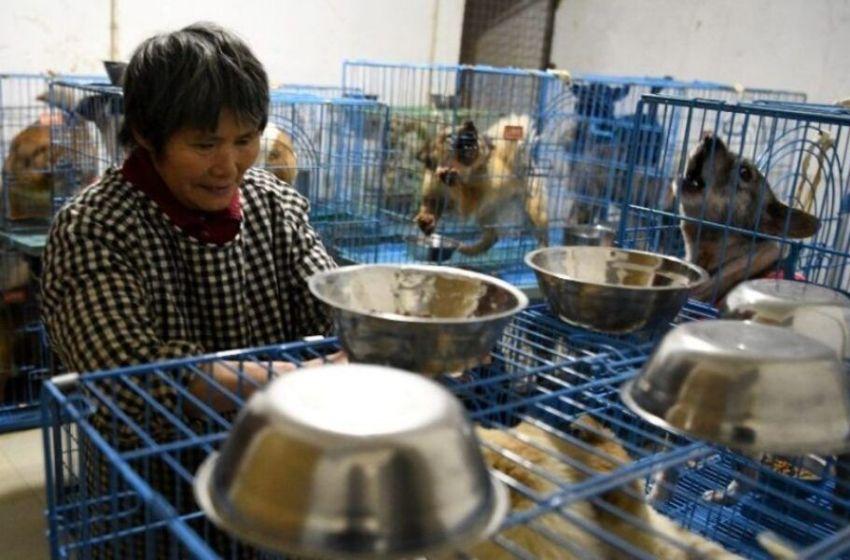 Conoce a este ángel quien vive con 1 300 perros en su hogar