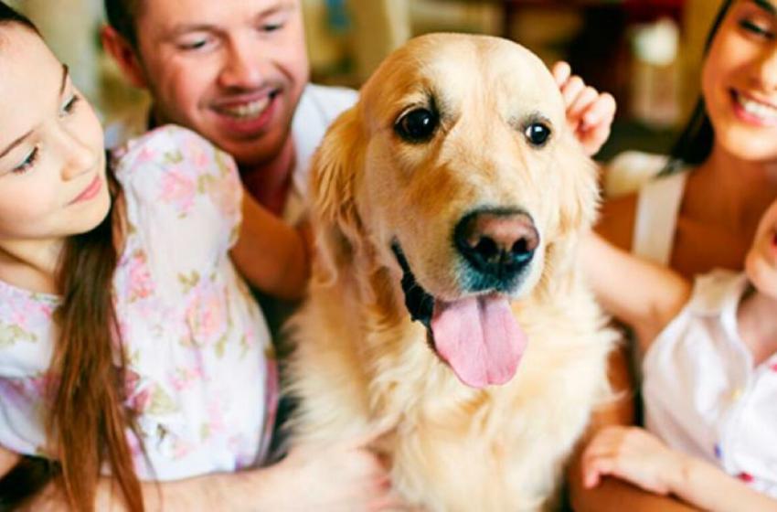 ¿Cuál es el tiempo de vida de un perro?, ¿Que hacer para que alargar su estadía con nosotros?