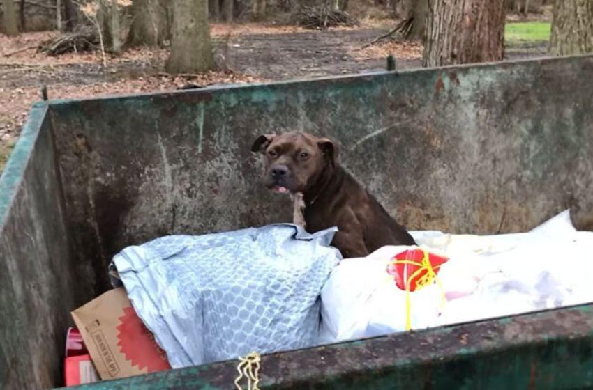 Perrito fue rescatado de un contenedor de basura, se encontraba completamente herido y a punto de desfallecer