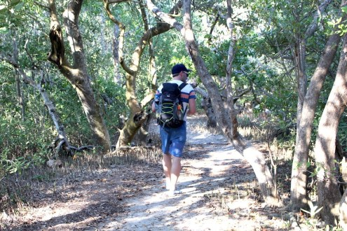 Holbox-Mangroves