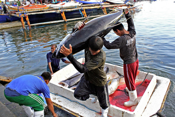 Workers haul tuna from a fishing boat at the Fish Port Complex in Barangay Tambler, General Santos City last Nov. 21, 2011. MindaNews photo by Erwin Mascarinas