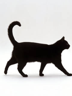 superstitie-pisica-neagra.jpg