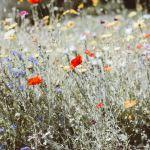 Inner healing journey met de adem