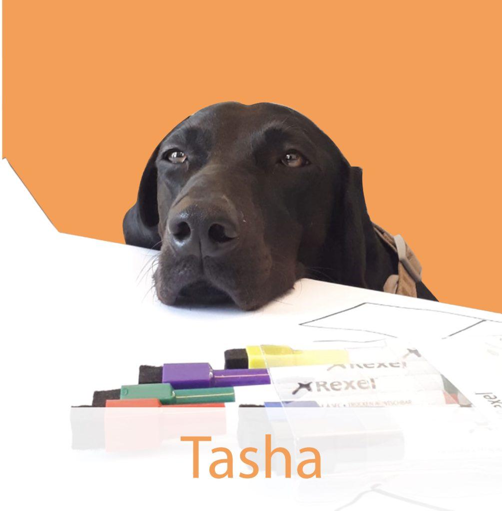 Team-Tasha