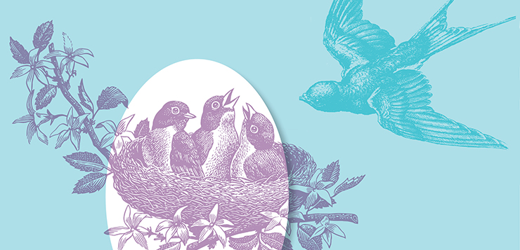 illustration birds in nest with mother coming to feed them