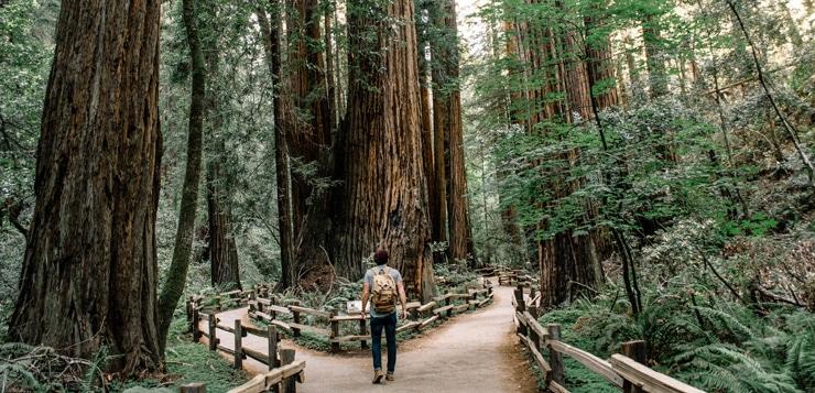 man walking through Muir Woods