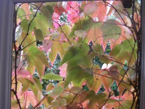 Equinox Leaves