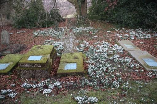 Snowdrops amongst the grave stones, St Andrew's, Miserden.