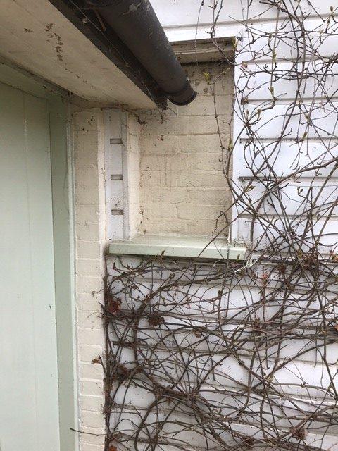 Laurel Cottage: Back Garden Laurel. Window Vitae!