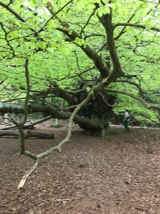 The Bench: The Witches Broom Tree.