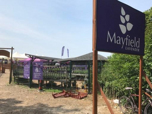 Heatwave: Entrance to Mayfield Lavender.