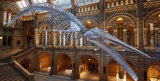 """Outbreak of Common Sense: You don't really want a picture of a beached whale. So here is """"Hope"""" the new star of the Natural History Museum. Replacing """"Dippy"""" the famous dinosaur of all our childhoods."""