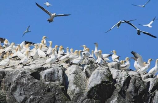 Kenny Birdringer: Ramsay Island.