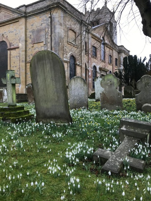 Apricot Village: The glory of snowdrops that enhance so many graveyards in late winter.