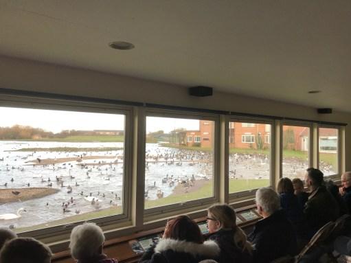 Cotswolds: Swan Lake.