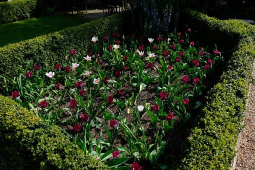 Dunsborough Park Garden: Glorious Tulip Bed.