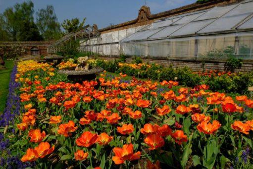Dunsborough Park Gardens: Ah. More Tulips. Just look at that colour!