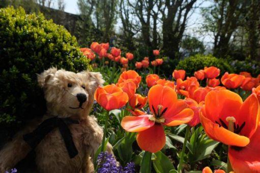 Dunsborough Park Gardens: Think the orange ones are my favourites.