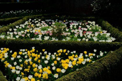 Dunsborough Park Gardens: More multi-coloured tulip artwork.