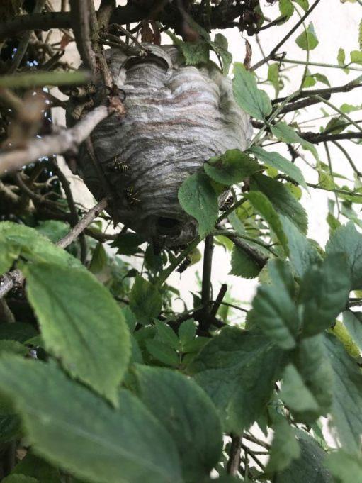 Ooh la la - The Nest.