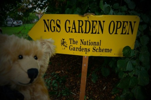 Dahlia Day: NGS Garden Open (National Gardens Scheme)