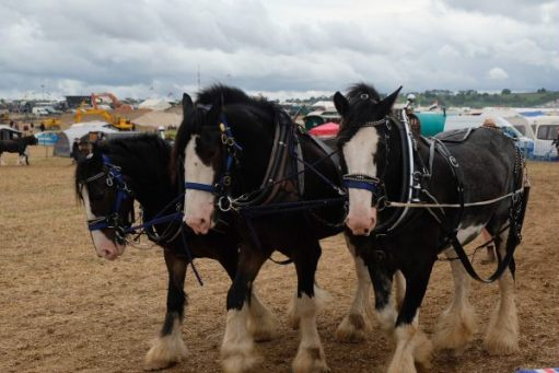 Great Dorset Steam Fair: