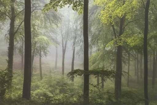 Landscape Photographer. Leigh Dorey: Spring Greens, North Dorset, England.