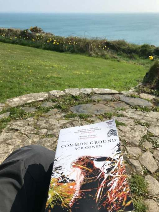 Walk from St David's: Nice place to read a book.