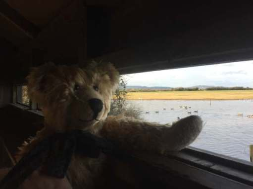 Cotswold Reverie: Birdwatching for bears.