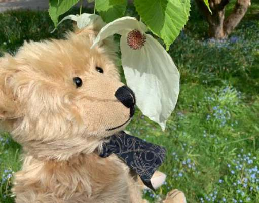 Bertie with his nose against a leaf.