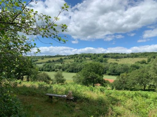 Abinger Roughs. Diddley's View. Bertie is sat on the Diddley's Bench enjoying the view.