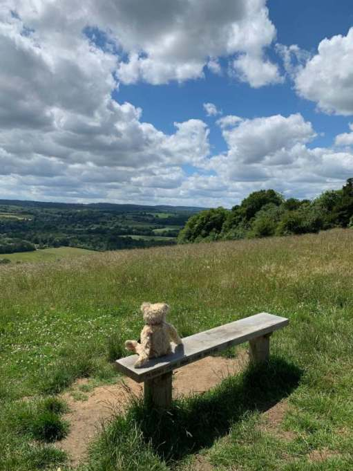 """Bertie sitting on a bench look south west over the Surrey Hills. The bench in inscribed """"Pilgrims come wind come weather""""."""