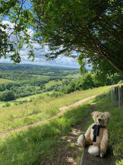 Bertie on a bench looking at the view south west towards Hindhead and Blackdown.