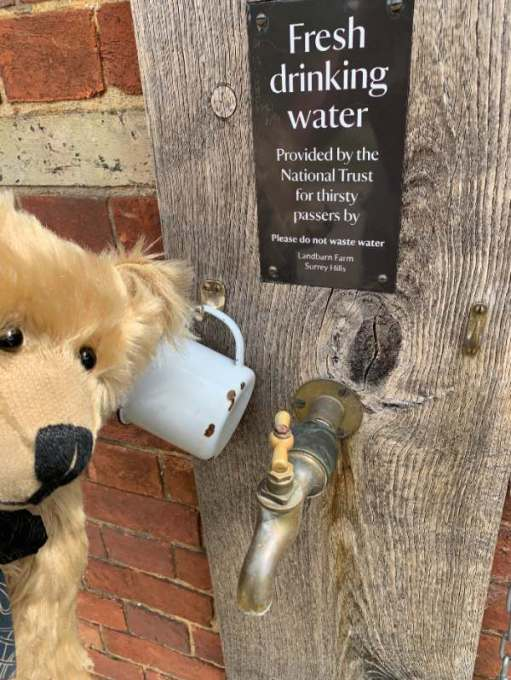 "Bertie looking at a tap. The sign above reads ""Water provided for thirsty passers-by""."