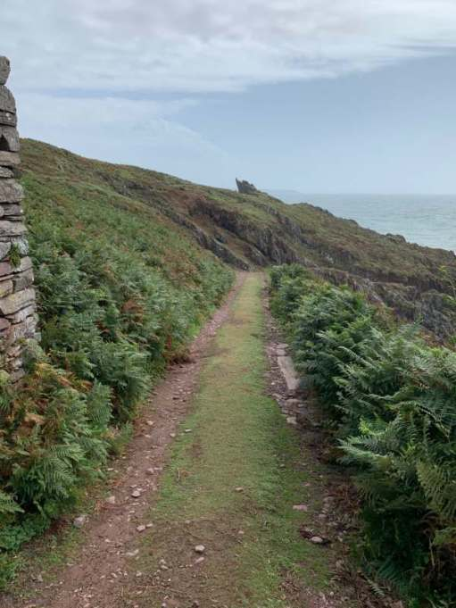 The path down to the landing stage. The Storm Petrel's colony is at the foot of the path.