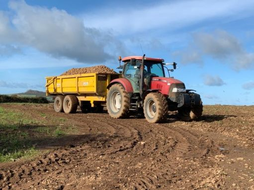 A red tractor pulling a yellow trailer heaped high with spuds across the ploughed field.