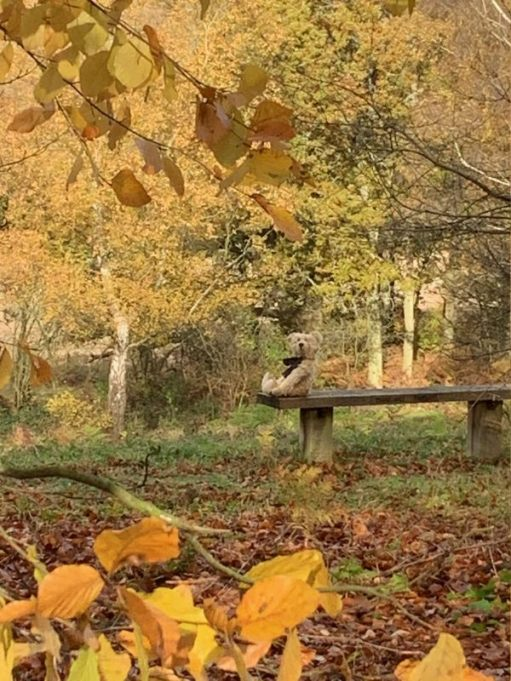 Bertie sat on Diddley's Bench, Abinger Roughs.