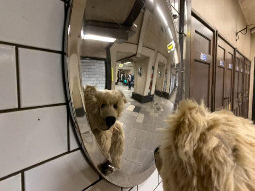 Bertie refleced in a convex mirror.