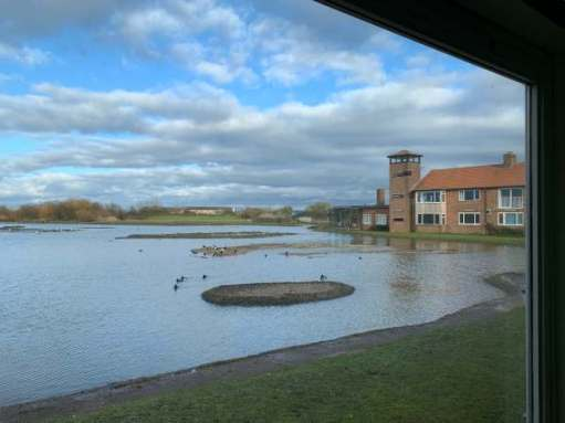 Swan lake. Peter Scott's house, Slimbridge.