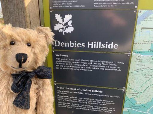 Bertie standing by the interpretation board for Denbies Hillside Nature Trail.