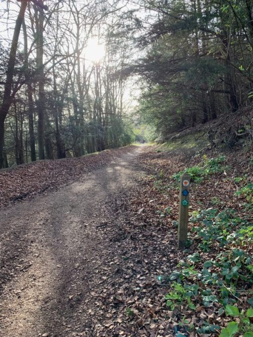 The carriage road, Denbies estate. A beautiful track through a wooded area.