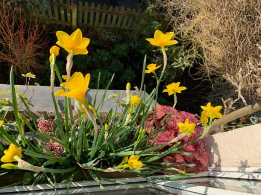 Looking down on the window box and its daffodils.
