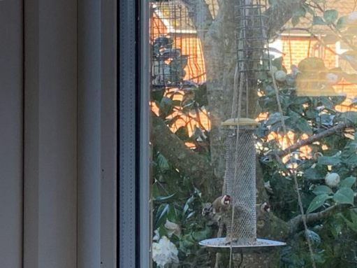 Looking through the kitchen window to the birdfeeder in the garden.