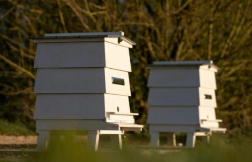 The Rolls-Royce Bee Hives.