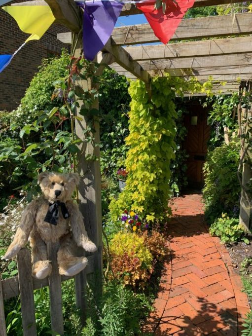 Bertie sat on the fence by the Victorian curved herringbone pathway under the pergola at laurel Cottage.